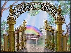 The Rainbow Bridge Poem The Beautiful Journey Of A Pet After Death